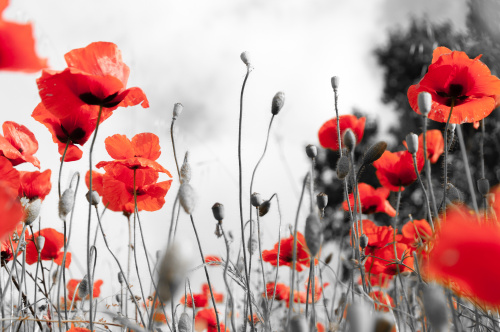 Focus On: Remembrance