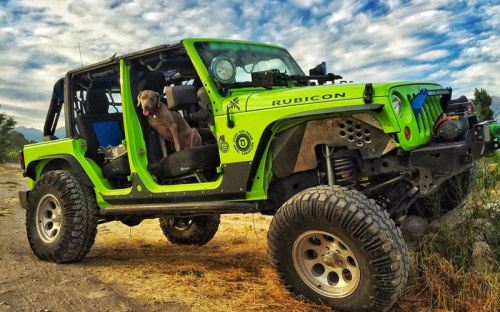 Jeep - National Dog Day