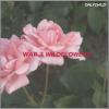 War & Wildflowers