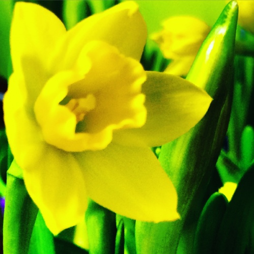 Focus On: Spring