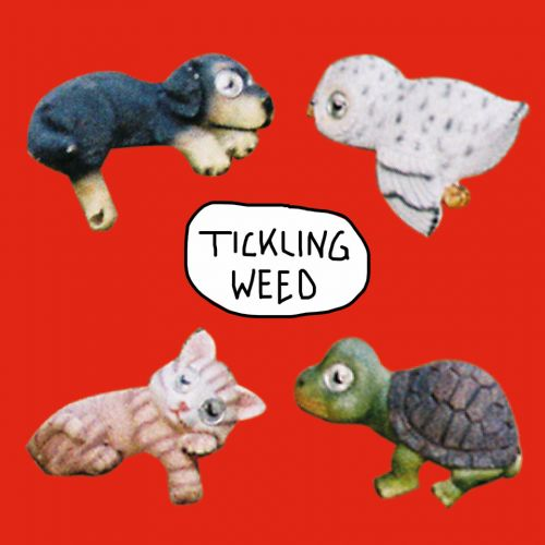 Tickling Weed