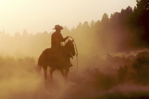 Focus On: Westerns