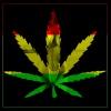 Reggae Love Cannabis