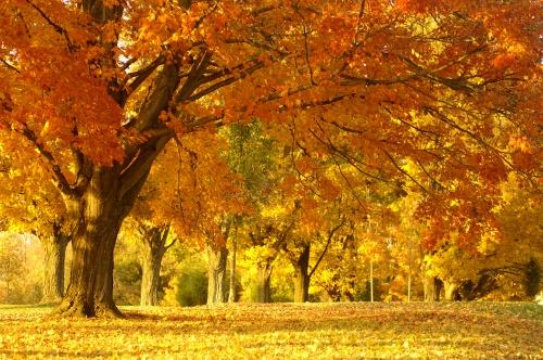 Focus On: Autumn